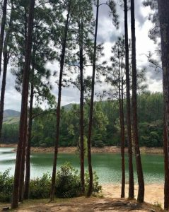 Reserva Forestal La Yeguada-Mi Guia Panama